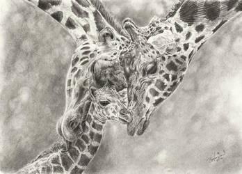 Giraffe Love by Pappa60