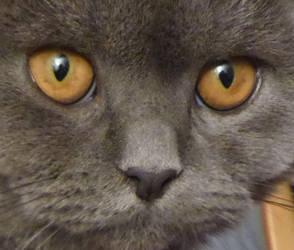 Esters eyes ref by Pappa60