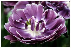Purple Curls by kamuidestiny