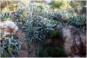 Killer Aloe by kamuidestiny