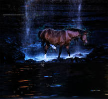...fireflies... by InsomniaticOnIce