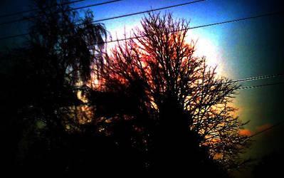 sunset by fallenjojo