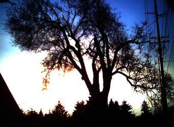 treebacklit by fallenjojo