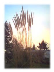 wheat pilliars by fallenjojo