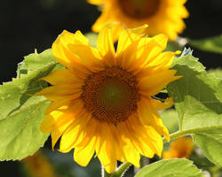Yellow by natureguy