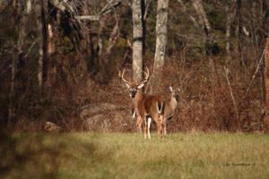 Woodland Couple by natureguy