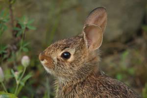 Morning Little Rabbit by natureguy