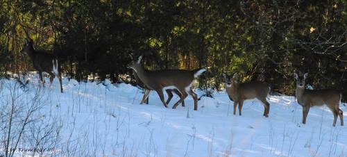8 degree Deer herd by natureguy
