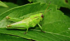 Little an Green by natureguy