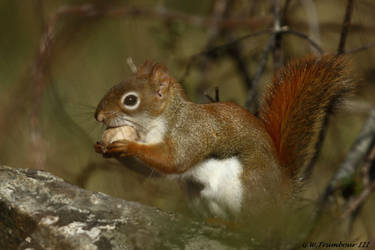 A tough Nut to crack by natureguy