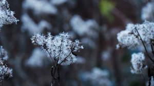 14/409 - Le champ de fleurs by DBott