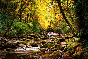Autumnal Stream by M-Lewis