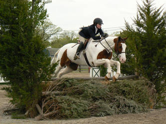 Stock-Pinto Equitation Jumper by TopDeckPhotography