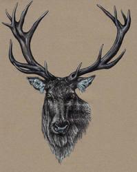 silver deer by SwarzezTier