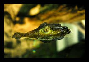 The Crocodile by manwithashadow