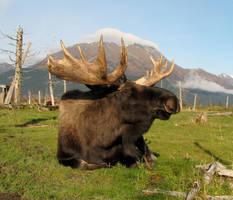 Moose by SweetAsPoison