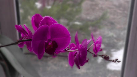 Spring flower by Zebra072
