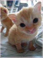 hello kitten by Ninjaana