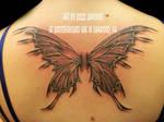 fairy wings by lavonne