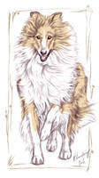 Collie drawing by Solkatt