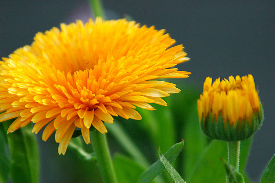 BP Flowers V by LDFranklin
