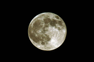 Luna by LDFranklin