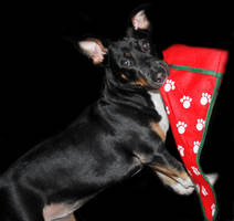 I Has A Christmas Stocking by LDFranklin