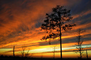 Bright Cloud Streaks I by LDFranklin