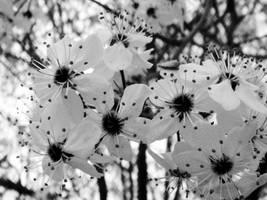 Mall Flowers III by LDFranklin