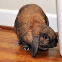 CPR Rabbits VII by LDFranklin