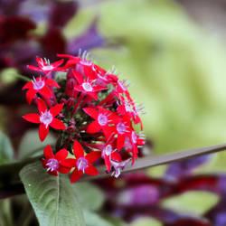 Flower Box V by LDFranklin