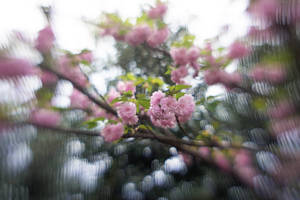 Azalea Garden Lensbaby X by LDFranklin
