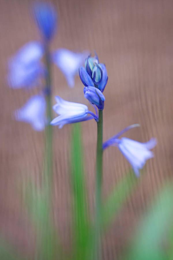 Azalea Garden Lensbaby XXV by LDFranklin