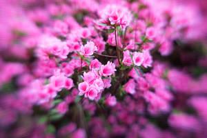 Azalea Garden Lensbaby XXXI by LDFranklin
