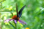 Botanical Garden Summer XXV by LDFranklin