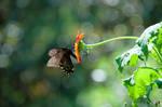 Botanical Garden Summer XXXI by LDFranklin