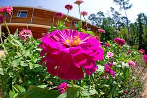 Fisheye Garden VII by LDFranklin