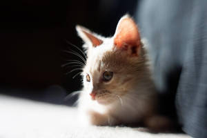 Baby Jonesy Lensbaby VI by LDFranklin