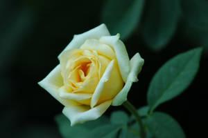 DC Flowers 54 by LDFranklin