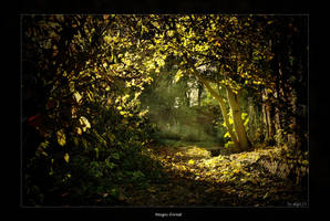 Magic-Forest by stg123