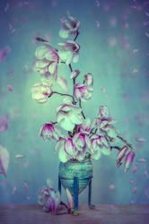 Magnolia by stg123