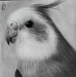 Daily Sketch #6 - Another Birb 3x3 by TricepTerry