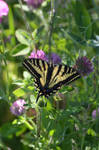 Machaon Sweety Butterfly by A1Z2E3R