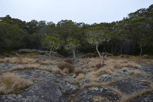 October Forest of Peak of Maido to Reunion Island by A1Z2E3R