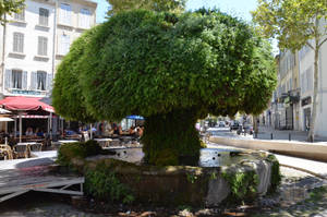 1st Mossy Fountain of Salon de Provence by A1Z2E3R