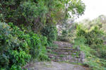 Vegetation around an old staircase in stones by A1Z2E3R