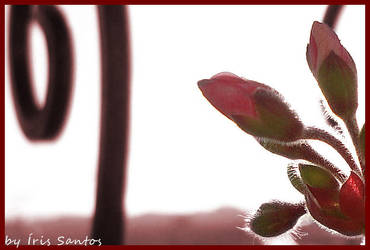 Rebirth by IrisVampyria