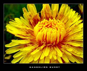 Dandelion Burst by mannisen