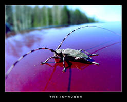 THE INTRUDER by mannisen