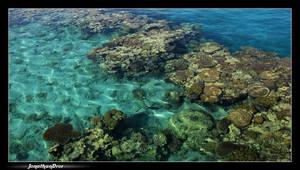 Beauty of the Sea by jonnydror